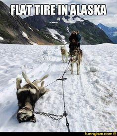 Flat tire in Alaska