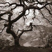 Valokuvatapetti - Autumn Maple