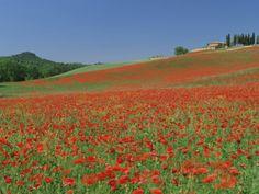 more memories of Tuscany