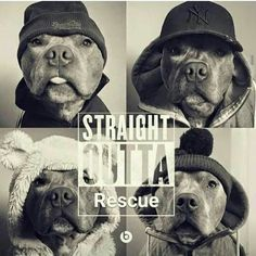 I love all dogs but pittbulls and huskies are my fav. Dogs and cute animals. Submit pics of your animals And I'll post them 😁 I Love Dogs, Puppy Love, Cute Dogs, Animals And Pets, Funny Animals, Cute Animals, Baby Animals, Animal Shelter, Animal Rescue