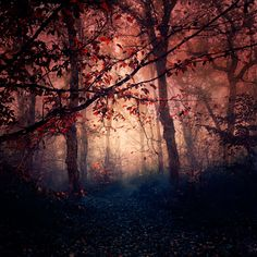Empty Paths by EbruSidar on DeviantArt