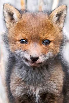 Wildlife photographer Ossi Saarinen captures then diverse and distinctive personalities of the adorable animals.