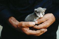 Tiny kitten in huge hands by Artem Zhushman for Stocksy United