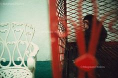 Rebecca Norris Webb - Cuba, Havana. 2003. Monkey, Havana Zoo