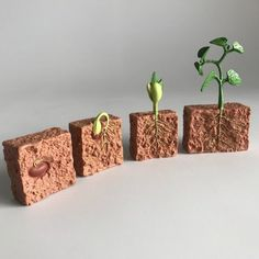 Life Cycle of a Green Bean Plant - Childrens House 662416 Life Cycle of a Green Bean Green Bean Seeds, Bean Plant, Bush Beans, Bean Sprouts, Life Cycles, Kids House, Horticulture, Botany, Green Leaves
