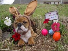 ❤This is the kind of EASTER BUNNY 'ya wanta find in your basket!❤