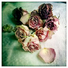 Dried roses from Valentine's Day