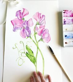 Sweet Peas are done ✅ Time to begin again. Prints and original are available. #artist_sharing #art_empire #artdaily #followart #artfollow #watercolor #watercolorpainting #watercolourart #watercolour #watercolourartist #aquarellepainting #aquarelle #sweetpeas #flowerart #botanicalpainting #waterblog #artistsoninstagram #artoftheday