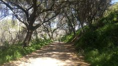 The Picturesque Oak-Lined Canyon In Southern California That Has The Dreamiest Nature Trail Ever