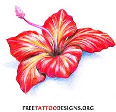 The Hibiscus is also a popular tattoo flower. It is a tropical flower (the state flower of Hawaii) and is usually red or yellow. Tropical flower tattoos are appropriate for both men and women.   The symbolic meaning of an Hibiscus tattoo is delicate beauty or consumed by love.
