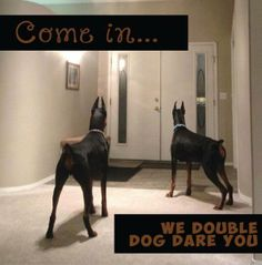 Come in... we double dog dare you.