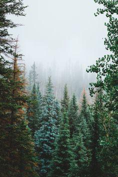 forrestmankins:  Misty summer mornings in Colorado.