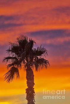 Silhouette Palm : See more images at http://robert-bales.artistwebsites.com/