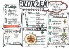 Polish Language, School Motivation, School Notes, Interactive Notebooks, Chemistry, Bullet Journal, Study, Science, Education