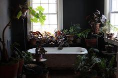 Jungle bath