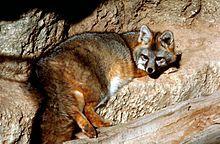 http://en.wikipedia.org/wiki/Canidae