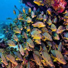 #PADI Instagram follower @brunonapolitano shared this school of fish photo with us.