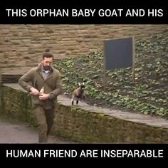 This Orphan Baby Goat and His Human Friend are Inseparable 😍 - Tiere / Animals - # Cute Funny Animals, Cute Baby Animals, Funny Cute, Animals And Pets, Farm Animals, Animal Pictures, Cute Pictures, Baby Goats, Cute Animal Videos