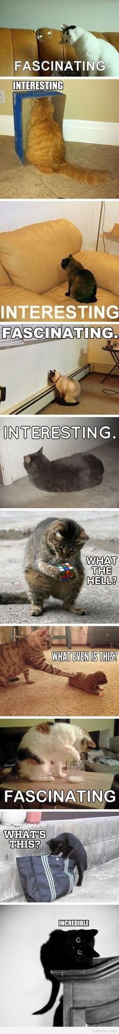 Funny interesting cats pictures   Funny Pictures   Funny Quotes   Funny Jokes – Photos, Images, Pics