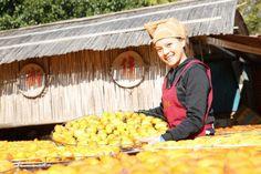 有「柿餅妹」美名的鄧皓云為味衛佳柿餅觀光農場業者呂理鑑的姪女,固定每年產季期間回鄉幫忙,也因清純的外型,成為農場內攝影愛好者的另一「亮點」。(中央社)