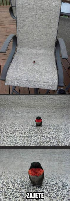 occupied by a bird small as an insect Wtf Funny, Hilarious, Polish Memes, Funny Mems, Everything And Nothing, Stuff And Thangs, Love Is Sweet, Animal Memes, Funny Moments