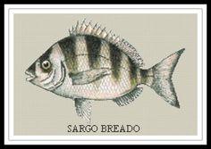"""Gráfico para punto de cruz de un """"Sargo Breado""""."""