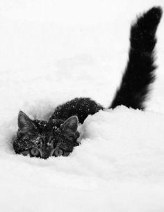 Snow cat!