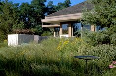 Image result for prairie yard landscaping