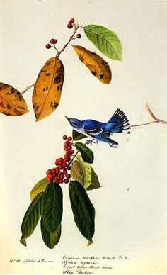 John Audubon 'the painter of birds' is one of my favorite artists.