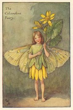 FLOWER FAIRIES: CELANDINE. Cicely \Mary Barker. Delightful Old print.c.1930