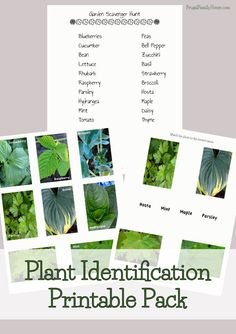 Free Plant Identification Printable Pack - Money Saving Mom®