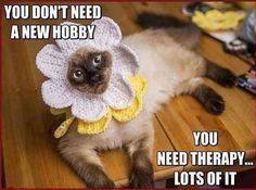 Mwahaha Poor cat. \µ/—>X) ☠☠☠