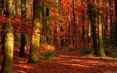 Autumn - Bing Images