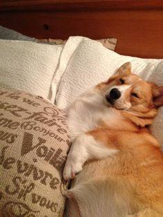 Oh bed, I won't ever leave you. #corgi