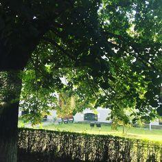 Return to innocence... #hometown #green #tree #childhoodmemories #highschool