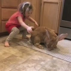 This bunny is an absolute unit. Cute Funny Animals, Cute Baby Animals, Animals And Pets, Cute Cats, Funny Dogs, Cute Animal Videos, Funny Animal Pictures, Cute Baby Bunnies, Cute Babies