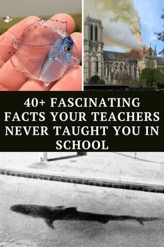 we are happy to present to you the most amazing and unusual facts that you were never taught in school Wtf Funny, Funny Laugh, Funny Jokes, Hilarious, Yoda Funny, Laughing Jokes, Can't Stop Laughing, Inspirational Short Stories, Spotlight Stories