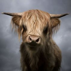 If you are a cow that looks like this, I will always find you adorable.
