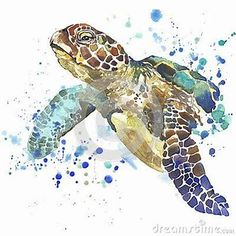 Image result for Easy Watercolor Paintings Turtle