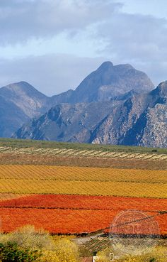 Autumn in the Cape Wine Route, Hex River Valley, Western Cape, South Africa African Countries, Countries Of The World, Clifton Beach, South Afrika, Westerns, Holiday Destinations, Wine Country, Beautiful Places, Beautiful Scenery