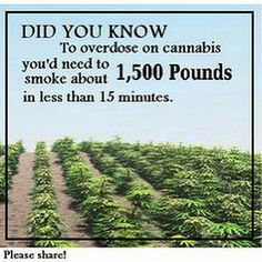And even then you would die from carbon monoxide poisoning NOT cannabinoid poisoning.