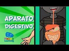 El Aparato Digestivo y la Digestión | Videos para Niños - YouTube