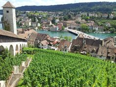 View from the Munot, Schaffhausen