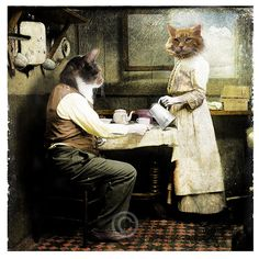 The breakfast - Anthropomorphic cat collage
