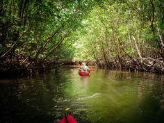 Ao Thalane (kayak through mangroves) - Krabi Town, Thailand