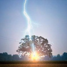 Huh, who woulda thunk it? From the Facebook page of Epic Nature: A person standing under an oak tree is 16 more times liable to be hit by lightning than if he had taken refuge beneath a beech tree. The oak tree has vertical roots which provide a more direct route to ground water.