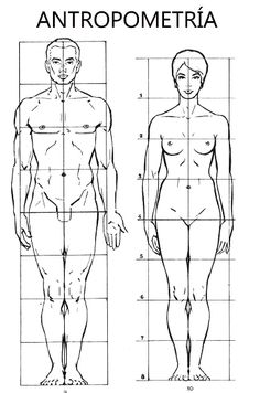 Proportions of the human figure Drawing Body Proportions, Human Body Drawing, Human Anatomy Drawing, Human Figure Drawing, Figure Drawing Reference, Anatomy Art, Human Art, Female Drawing, Body Sketches