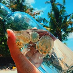 beach, blue, and bottle image