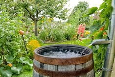 Pumps or elevation - A rain barrel with neither isn't very useful. Find out what the best type of rain barrel works best for collecting water. Organic Gardening, Gardening Tips, Sustainable Gardening, Sustainable Living, Container Gardening, Barris, Water Collection, D House, Rainwater Harvesting