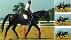 Overstepping the mark: the mystery of engagement - Featured, Focus, Training & Husbandry - Horsetalk.co.nz